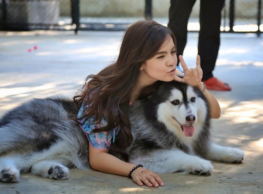 True Love Cafe Bangkok, Cafe Untuk Para Pecinta Anjing Jenis Husky