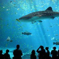 Keindahan Biota Laut Di Ocean World Bangkok