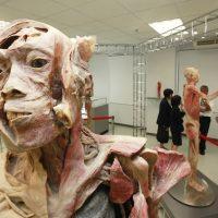 Pelajari Anatomi Tubuh Manusia Di Human Body Museum