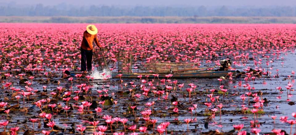 Keindahan Danau Dengan Ribuan Bunga Teratai di Thailand