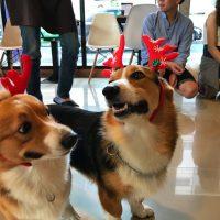Rasakan Keseruan Bermain Bersama Anjing Di House of Paws